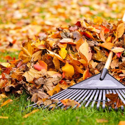 16419297 - pile of fall leaves with fan rake on lawn